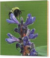 Bumble Bee Breakfast Wood Print