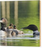 Loon Mom Serves Breakfast In Bed Wood Print