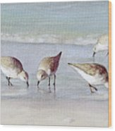 Breakfast On The Beach, Snowy Plover Sandpipers, Siesta Key, Wide-narrow Wood Print