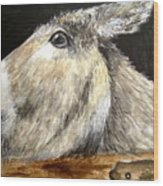 Breakout Mule Wood Print