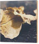 Breaks Of Autumn Wood Print