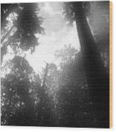Breathing Trees Wood Print