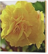 Breathtaking Begonia Wood Print