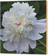 Breathtaking - Festiva Maxima Double White Peony Wood Print