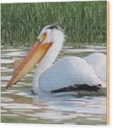 Breeding American White Pelican On Lower Sunshine Wood Print