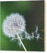 Breezy Dandelion Wood Print