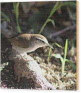 Breswick Wren On Tree Root 2 Wood Print