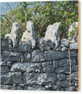 Briars And Stones New Quay Ireland County Clare Wood Print