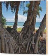 Bribie Trees  Wood Print