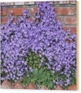Brick Wall With Blue Flowers Wood Print