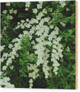 Bridal Wreath Wood Print