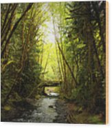 Bridge In The Rainforest Wood Print