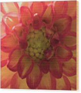 Red And Yellow Flower Bloom Wood Print