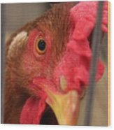 Bright And Colorful Chicken Who Are You Wood Print