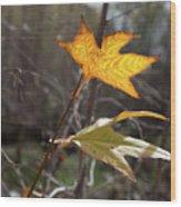 Bright And Sunlit Leaf, Arizona Wood Print