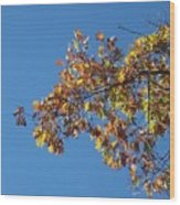 Bright Autumn Branch Wood Print