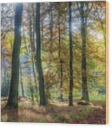 Bright Autumn Morning Wood Print