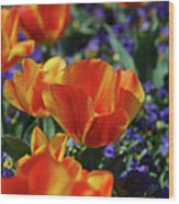 Bright Colored Garden With Striped Tulips In Bloom Wood Print