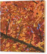 Bright Colorful Autumn Tree Leaves Art Prints Baslee Troutman Wood Print