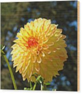 Bright Colorful Dahlia Flower Art Prints Baslee Troutman Wood Print