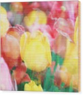 Bright Dreams In The Tulips Wood Print