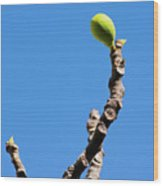 Bright Fig Against The Sky. Wood Print