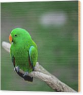 Bright Green Parrot Wood Print