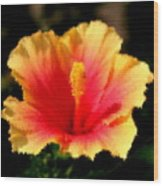 Bright Hibiscus Wood Print