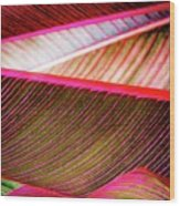 Bright Leaves 548 Wood Print