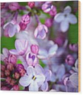 Bright Lilacs Wood Print by The Forests Edge Photography - Diane Sandoval