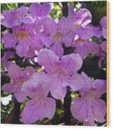 Bright-lillac Flowers 6-22-a Wood Print
