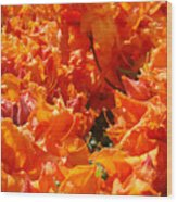 Bright Orange Rhodies Art Prints Canvas Rhododendons Baslee Troutman Wood Print