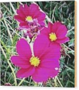 Bright Pink Flowers Wood Print