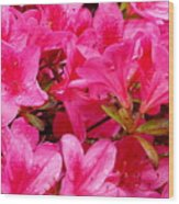 Bright Pink Rhododendrons Wood Print