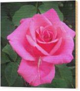 Bright-pink Rose 049 Wood Print