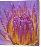 Bright Purple Lotus Wood Print