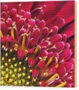 Bright Red Gerbera Daisy Wood Print