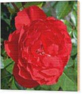 Bright Red Rose At Pilgrim Place In Claremont-california  Wood Print