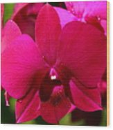 Bright Scarlet Red Orchid Wood Print