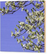 Bright Spring Blossom 1 Wood Print