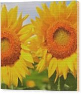 Bright Sunflowers Wood Print