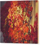 Bright Sunny Red Autumn Plants Wood Print
