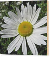 Bright White Flower With Water Droplets Wood Print