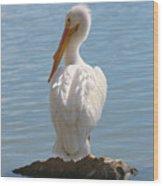 Bright White Pelican Wood Print