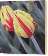 Bright Yellow And Red Tulips Wood Print