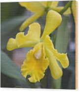 Bright Yellow Cattleya Orchid Wood Print by Allan Seiden - Printscapes