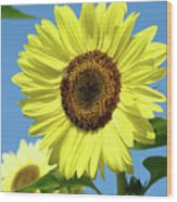 Bright Yellow Sunflower Art Prints Blue Sky Baslee Troutman Wood Print