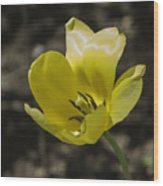 Bright Yellow Tulip Squared Wood Print