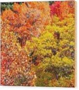 Brillant Fall Wood Print