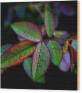 Brilliant Autumn Rose Foliage Wood Print